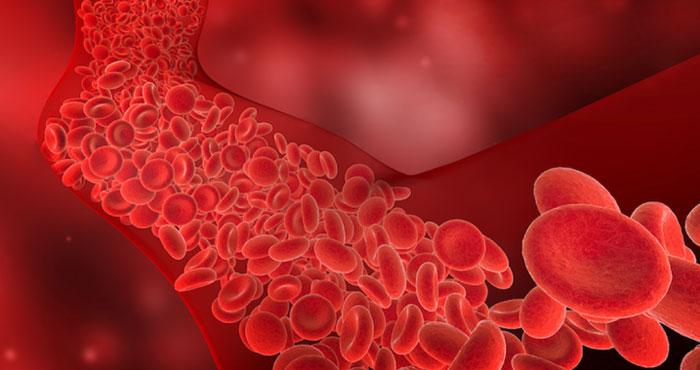 Arterial and Venous Surgeries